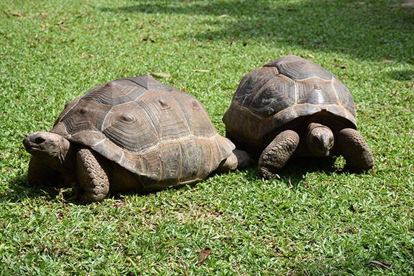 สวนสัตว์เปิดเขาเขียวต้อนรับน้องใหม่เต่ายักษ์อัลดาบรา พร้อมเพื่อนอีก3ชนิด จากสวนสัตว์เขาดิน