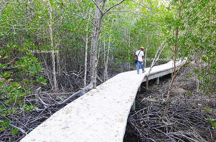 เส้นทางเดินศึกษาธรรมชาติป่าชายเลนบ้านทุ่งหยีเพ็ง