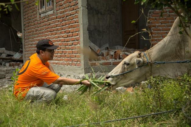 """เปิดใจ """"หมอน็อต"""" สัตวแพทย์หัวใจหล่อ  ลงพื้นที่อินโดนีเซีย ช่วยเหลือสัตว์จากภัยพิบัติ"""