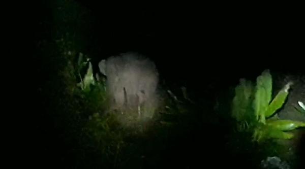 โขลงช้างป่ายังลงจากเขาเข้าหากินในพื้นที่ชาวบ้าน อ.โป่งน้ำร้อน   จนท.เร่งผลักดัน