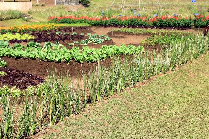 หญ้าแฝกช่วยยึดดิน แก้ปัญหาหน้าดินถูกชะล้าง