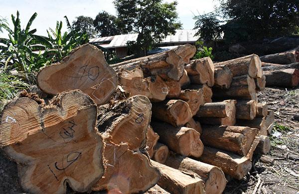 ชุดพยัคฆ์ไพร ตามรวบขบวนการค้าไม้ข้ามชาติ กว่า 1 ปี สุดท้ายจนมุมที่อ่างทอง