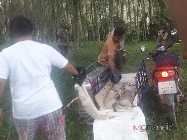 สุดหดหู่ใจ! ชาวบ้านช่วยกันฝังซากศพแมว 33 ตัวในป่าช้า หลังถูกสุนัขในวัดทุ่งงายกัดตาย