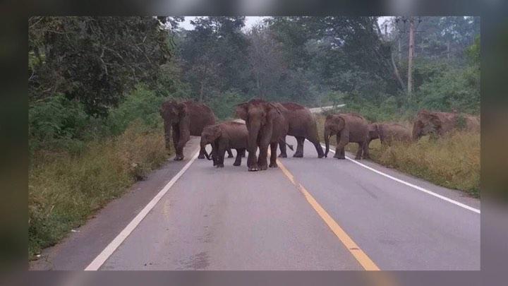 หน.อุทยานฯแก่งกระจาน แจ้งเตือนภัยผู้สัญจรไป-มา ระวังโขลงช้างป่าข้ามถ.ป่าละอู