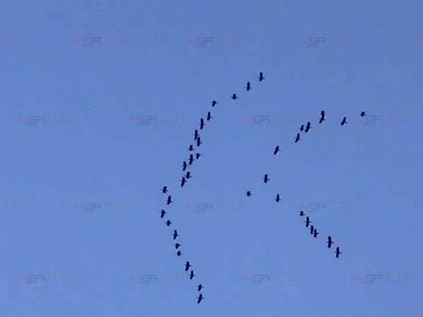 ตะลึง! พบฝูงนกเงือกกรามช้างกว่า 200 ตัวบินเหนือป่าวังหีบชี้ชัดถึงความอุดมสมบูรณ์