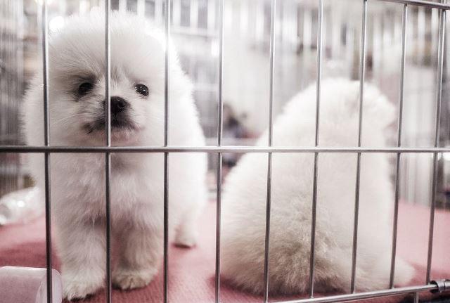"""อังกฤษห้ามร้านสัตว์เลี้ยงขาย """"ลูกหมา-ลูกแมว"""" หวังแก้ปัญหาฟาร์มนรก"""