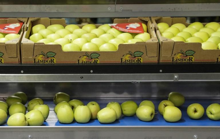 เชื่อว่าการรับประทานผัก ผลไม้จะช่วยลดความเสี่ยงการเป็นโรคอัลไซเมอร์ (Thomas SAMSON / AFP)