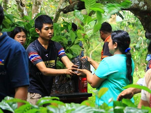 ต้นพันธุ์กาแฟโรบัสต้า 4,000 ต้น ส่งถึงมือเกษตรกรบันนังสตา จ.ยะลา
