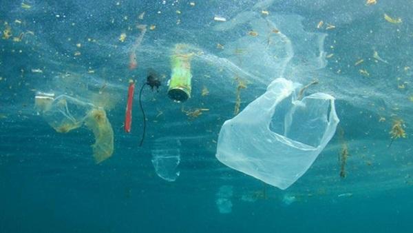 ขยะพลาสติกนานาชนิด กระทบต่อการดำรงอยู่ของสัตว์ทะเล และระบบนิเวศ