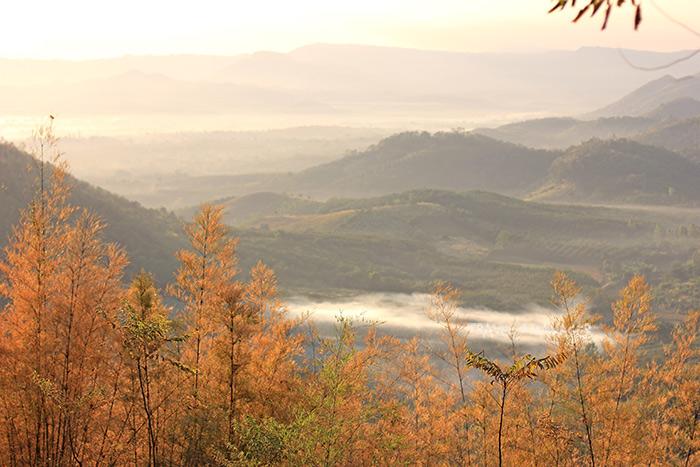 ภูชมลาว-วิวไม้ฮวกเปลี่ยนสี และแนวทิวเขาอันกว้างไกลเมื่อมองจากภูชมลาว