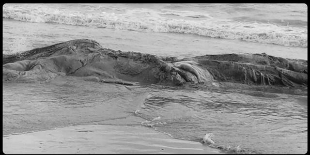 """พบซาก """"วาฬ"""" ตายเกยบนหาดแหลมตะลุมพุก รอตรวจสอบสาเหตุการตาย"""