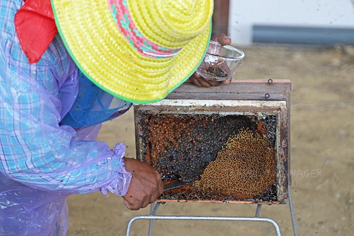 ธนาคารผึ้งชันโรง