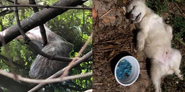 คนรักสัตว์ อยุธยาฯ วอนจับมือวางยาเบื่อ แม่-ลูกหมา  ตายสังเวยหน้าบ่อนไก่