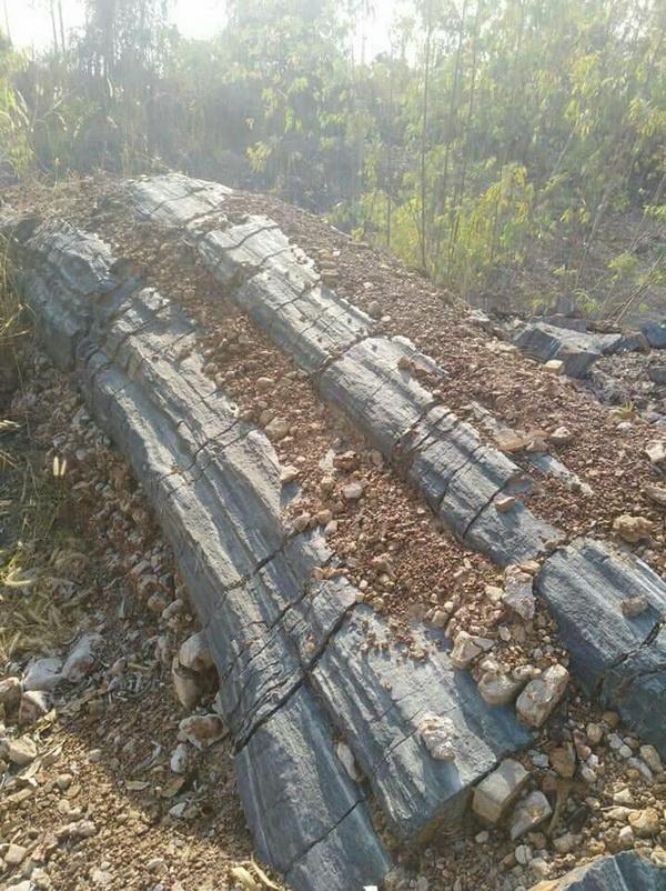 ฮือฮา !พบต้นไม้กลายเป็นหินในพื้นที่เมืองพิจิตรคอหวยไม่พลาดแห่จุดธูปขอเลขเด็ด
