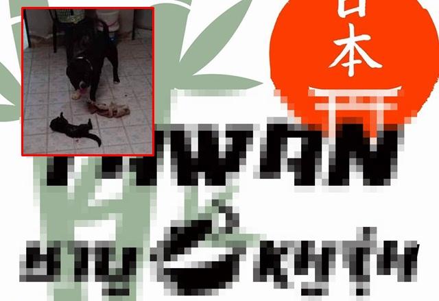 รุมจวกเละ! เพจร้านชาบู เจ้าของคลิปเย้ย ปล่อยสุนัขบูลลีกัดลูกแมวจนตาย