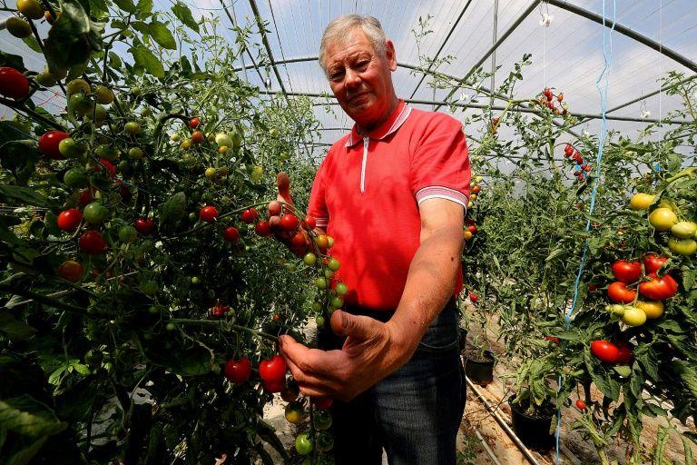 ชาวสวนมะเขือเทศฝรั่งเศสดูแลผลผลิต (Philippe Huguen/AFP/Getty)