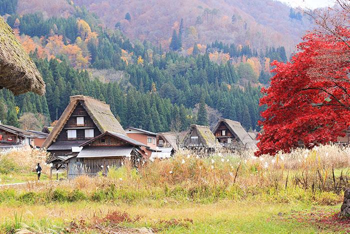 สีสันชิราคาวาโกะช่วงใบไม้เปลี่ยนสีในฤดูใบไม้ร่วง