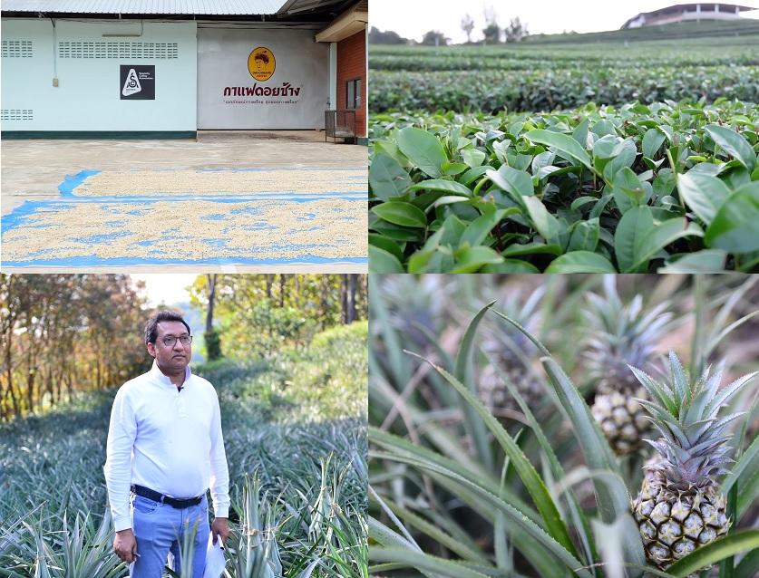 """""""พาณิชย์""""ปิ้งดันแหล่งผลิตสินค้าGIเชียงราย เป็นที่ท่องเที่ยวเพิ่มรายได้เกษตรกร"""