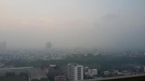 ต้นไม้ในเมืองใหญ่ ช่วยขจัดฝุ่นละออง PM2.5 ยั่งยืน
