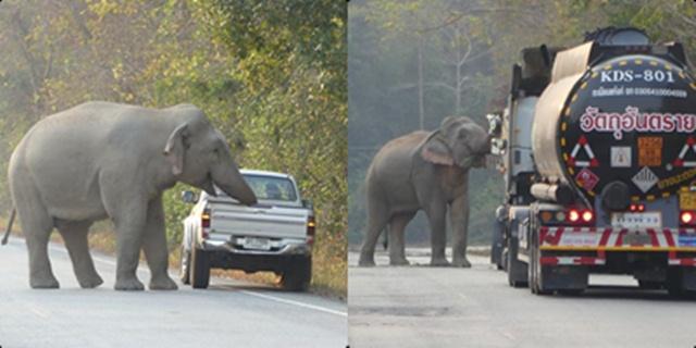 เตือนภัย! ระวังช้างป่าอ่างฤาไน หากินเส้นทาง 3076  พบมีพฤติกรรมรุนแรงมากขึ้น
