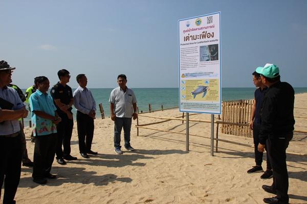 ปลัดกระทรวงทรัพย์ฯติดตามสถานการณ์เต่ามะเฟืองขึ้นวางไข่บนหาดคึกคัก