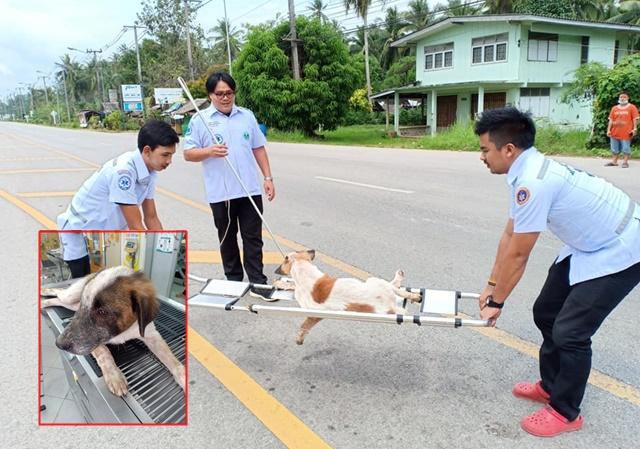 จริงจังแค่ไหน! ชุดฉุกเฉินจังหวัดชุมพรช่วยสุนัขโดนรถเฉี่ยว แบกขึ้นเปล ใส่ใจไม่ต่างจากมนุษย์