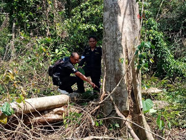 ผู้ว่าฯ พังงา สั่งเร่งดำเนินคดีนายทุนบุกรุกป่าสงวนฯ ลักลอบตัดไม้กว่า 100 ไร่