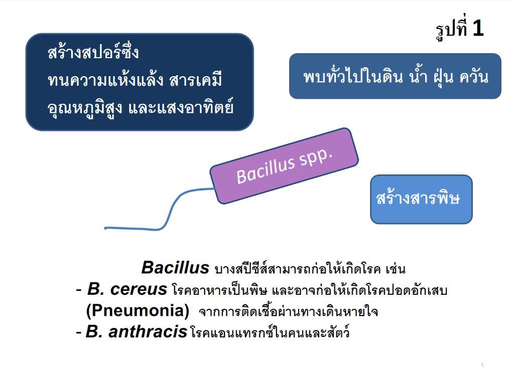 เชื้อโรคร้ายในฝุ่น PM2.5