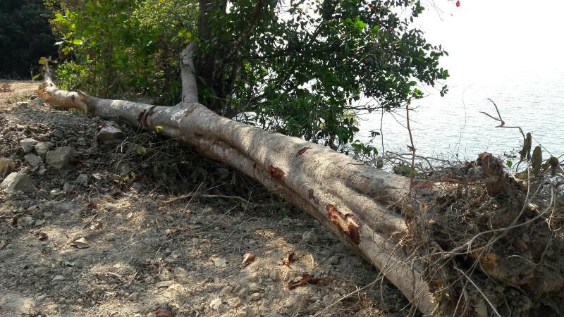 หวั่นเขาแหลมสิงห์ จันทบุรี ถูกบุกรุก.. หลังพบผู้มีอิทธิพลนำรถแบคโฮเข้าแผ้วถางป่า