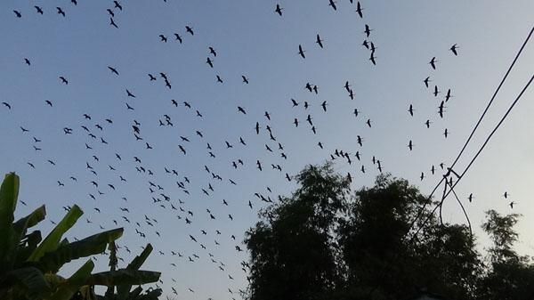 ชาวบ้านครวญนกกว่าหมื่นตัวยึดพื้นที่ ทั้งกลิ่นเหม็นและหวั่นโรคที่มากับนก