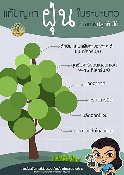 รสทป. กรมป่าไม้ ชวนปลูกต้นไม้ แก้ปัญหาฝุ่นในระยะยาว