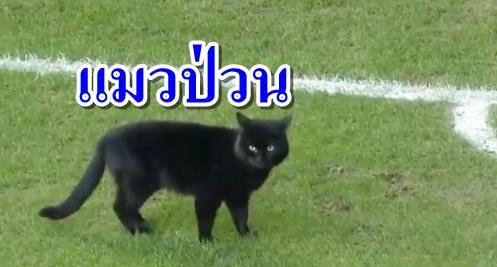 """""""น้องแมว"""" บุกสนามพรีเมียร์ลีกป่วน """"เอฟเวอร์ตัน-วูล์ฟ"""" (คลิป)"""