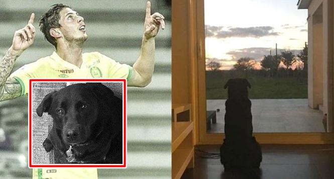 """ภาพสะเทือนอารมณ์! หมา """"ซาลา"""" นั่งรอเจ้านายกลับบ้าน"""