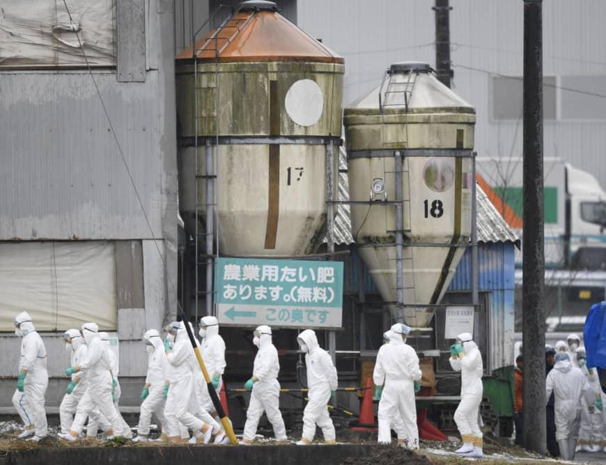 อหิวาต์สุกรระบาดหนักใน 5 จังหวัดของญี่ปุ่น เชือดหมูทิ้งไปแล้วหลายหมื่นตัว