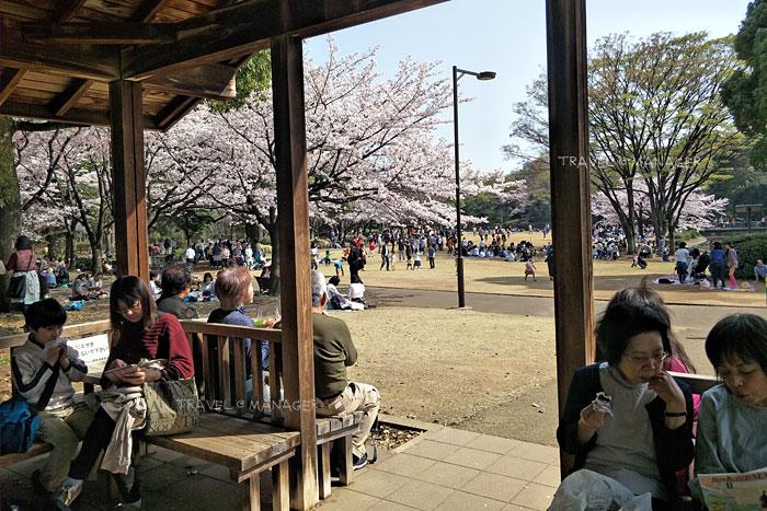 สีชมพูไปทั่วบริเวณสวนคิตะโนะมารุ