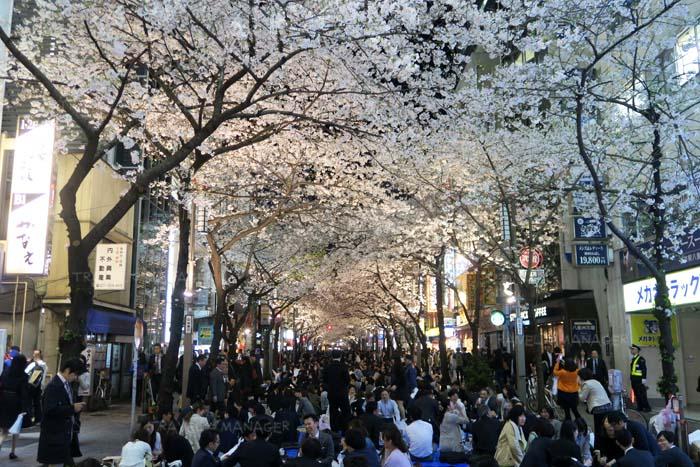 บรรยากาศช่วงค่ำวันศุกร์ที่ถนนซากุระ
