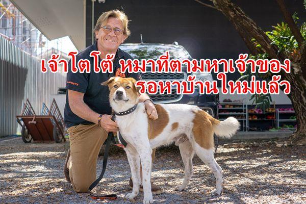 เจ้าโตโต้' สุนัขแสนซื่อ พร้อมหาบ้าน – เจ้าของใหม่แล้ว หลังใช้ชีวิตเร่ร่อนตามหาเจ้าของที่ทิ้งไป