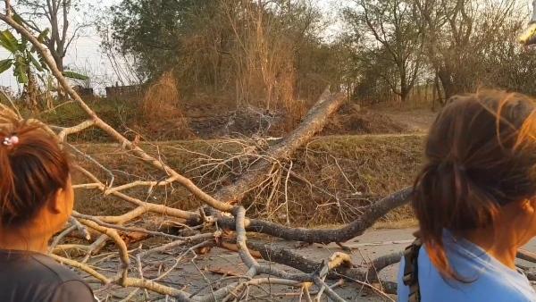 มักง่าย!ชาวสวนแม่เมาะ แอบเผาต้นไม้ใหญ่ล้มขวางถนนทับรถผ่านทาง 5 ชีวิตหวิดดับ