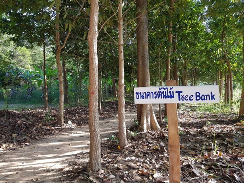 รัฐปลดล็อกช่วยคนปลูกป่าไม้มีค่า ใช้ค้ำประกันเงินกู้ได้ !