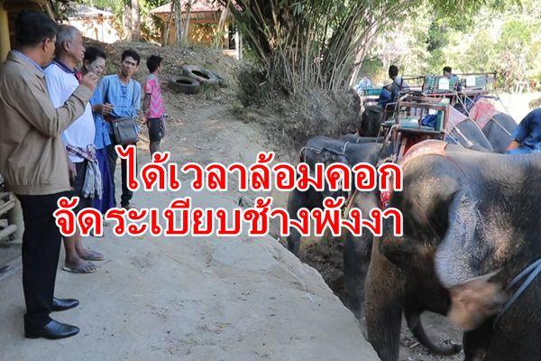 ได้เวลาล้อมคอก ผู้ว่าพังงาสั่งคุมเข้มช้างทัวร์ หวั่นเกิดเหตุซ้ำ