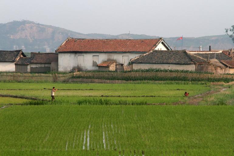 โสมแดงวอน UN ช่วยป้องกันวิกฤต 'ขาดแคลนอาหาร' หลังเพาะปลูกไม่ได้ผล