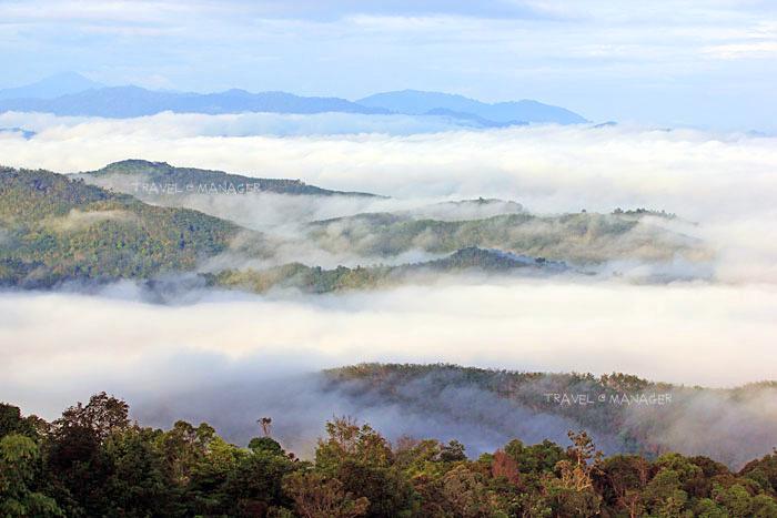 ป่าอันอุดมสมบูรณ์เบื้องล่างสร้างความชุ่มชื้นจนเกิดเป็นสายหมอก