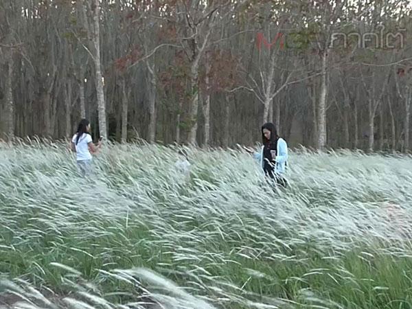"""ธรรมชาติรังสรรค์ """"ทุ่งดอกหญ้าคา"""" แลนด์มาร์คแห่งใหม่ที่บ้านด่านนอก จ.สงขลา"""