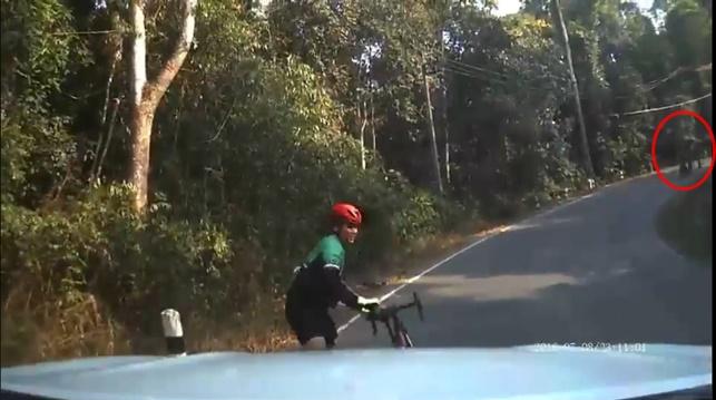 วิ่งสิครับ! หนุ่มขี่จักรยานขึ้นเขาใหญ่ สติดี เจอช้างป่าวิ่งเข้าใส่ รีบแบบจักรยานหนีอย่างเร็ว