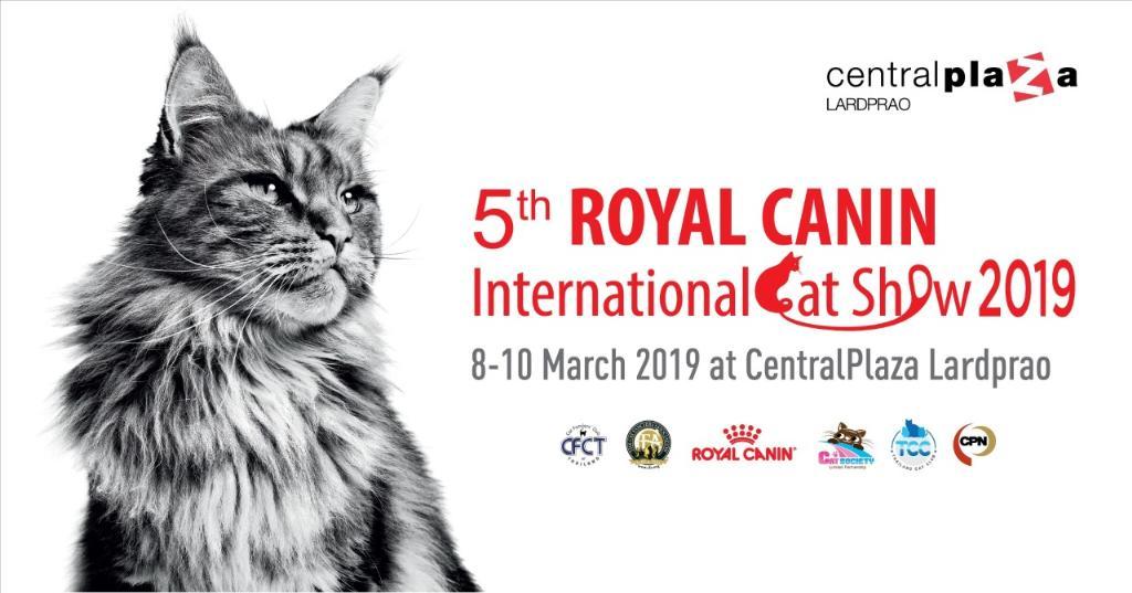 """แมวสวยหลายสายพันธุ์ดีกรีรางวัลระดับโลก เดินสายเข้าประกวดในประเทศไทย ในงาน """"5th Royal Canin International Cat Show 2019"""""""