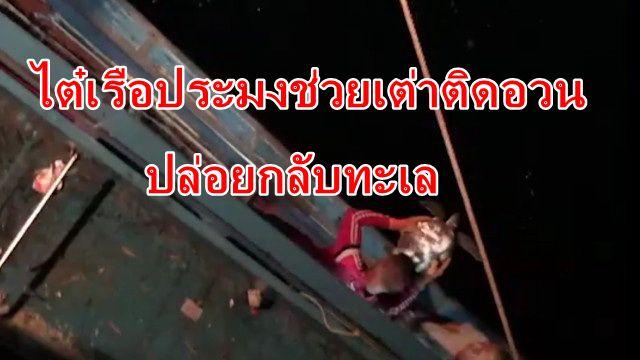 ไต๋เรือประมงพังงาใจบุญช่วยเต่าตะนุติดอวนปล่อยกลับลงทะเล
