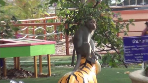 ป่วนทั้งโรงเรียน!ลิงแสมบุก ร.ร.กลางเมืองอุทัยฯ จนท.ระดมกำลังล่อจับไม่เป็นผล