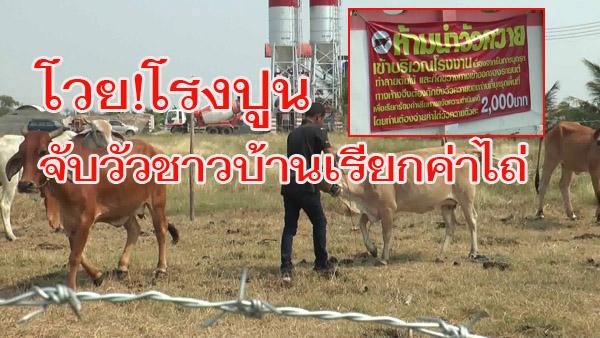 อย่างนี้ก็มีด้วย! ชาวบ้านบุรีรัมย์วอนช่วย ถูกโรงงานปูนปิดประตูขังวัว-ควาย เรียกค่าไถ่ตัวละ 2 พัน