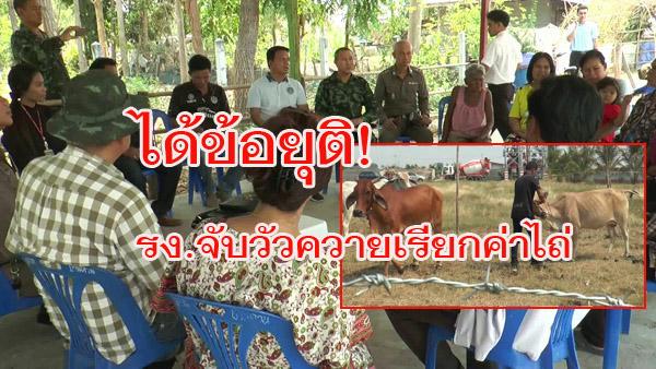 ยุติแล้ว! พิพาทกักขังวัวควายเรียกค่าไถ่ รง.ปูนยอมลดเหลือตัวละ 100 ชาวบ้านรับปากดูแลสัตว์เลี้ยง