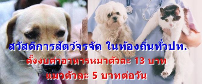มท. กำหนดค่าอาหาร เลี้ยงแมวหมาจรจัด 5-13 บาท/วัน/ตัว ตามระเบียบสวัสดิการสัตว์ในท้องถิ่นทั่วปท.